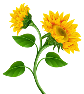 Sunflower PNG Photo PNG Clip art