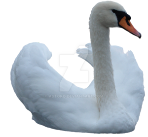 Swan PNG Image PNG Clip art