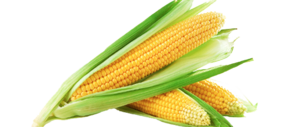 Sweet Corn PNG Image PNG Clip art