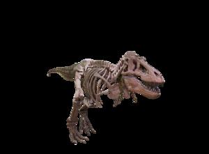 T Rex PNG Background Image PNG Clip art