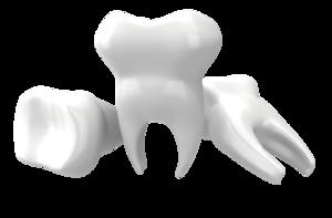 Teeths PNG PNG Clip art