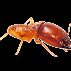 Termite PNG File PNG Clip art