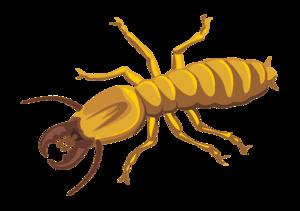 Termite PNG Photos PNG Clip art