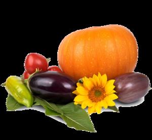 Thanksgiving Pumpkin PNG Image PNG Clip art
