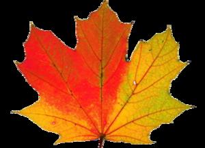 Thanksgiving Transparent PNG PNG Clip art