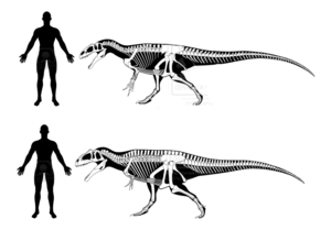Theropod PNG Clipart PNG Clip art
