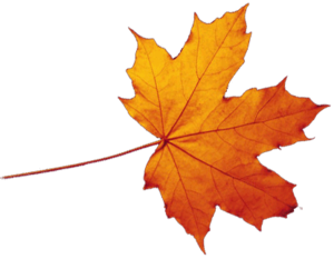 Transparent Autumn Leaves Falling PNG PNG Clip art