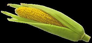 Transparent Corn PNG PNG Clip art