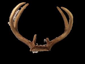 Transparent Deer Antlers PNG PNG Clip art