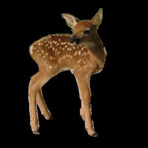 Transparent Deer PNG PNG Clip art