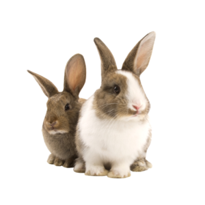Transparent Pet Bunny Rabbit PNG PNG Clip art