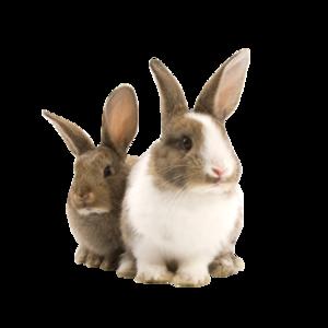 Transparent Pet Bunny Rabbit PNG PNG Clip art