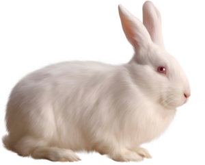 Transparent White Bunny Rabbit PNG PNG Clip art