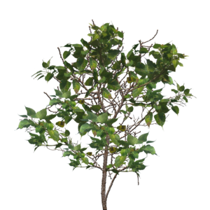 Tree Branch PNG Image PNG Clip art