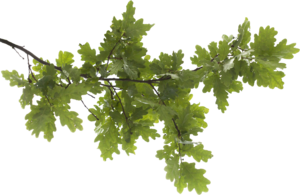 Tree Branch PNG Transparent Image PNG icon