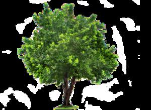 Tree PNG Clipart PNG Clip art