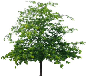 Tree PNG File PNG Clip art