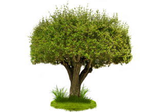 Tree PNG Image PNG Clip art
