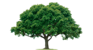 Tree PNG Photos PNG icons