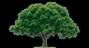 Tree PNG PNG Clip art