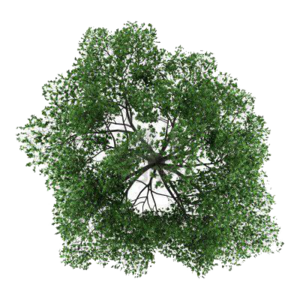 Tree Top PNG Photos PNG icon