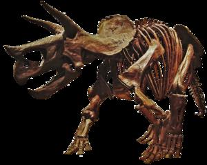 Triceratop Download PNG Image PNG Clip art