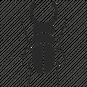 True Bug PNG Image PNG Clip art