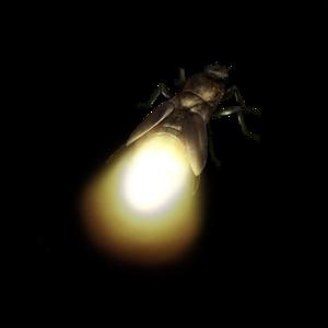 True Bug PNG Transparent Image PNG Clip art