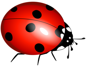 True Bug Transparent Background PNG Clip art