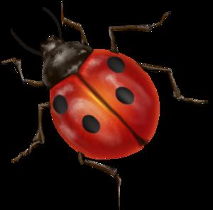 True Bug Transparent PNG PNG Clip art