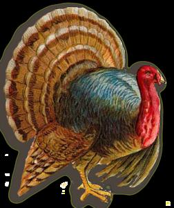 Turkey PNG Clipart PNG Clip art