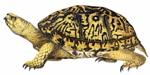 Turtle PNG File PNG Clip art