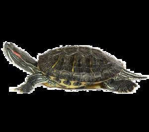 Turtle PNG Image PNG Clip art
