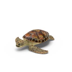 Turtle Transparent PNG PNG Clip art