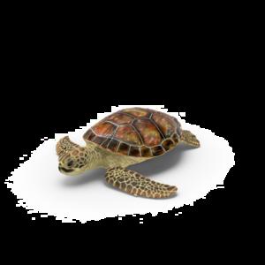 Turtle Transparent PNG PNG Clip art