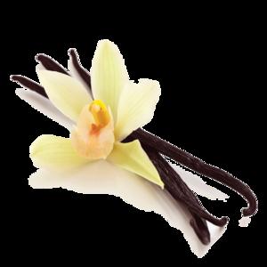 Vanilla Bean PNG Picture PNG Clip art