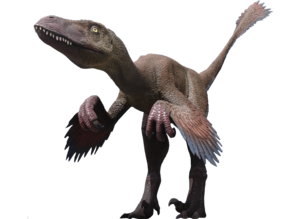 Velociraptor PNG Clipart PNG Clip art