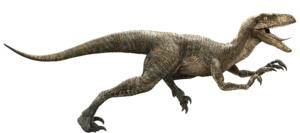 Velociraptor PNG HD PNG Clip art