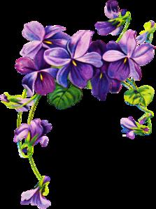 Violet PNG Free Download PNG Clip art