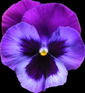 Violet PNG Photos PNG Clip art