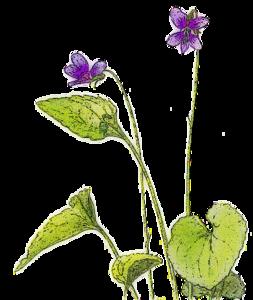 Violet PNG Picture PNG Clip art