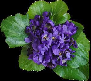 Violet PNG Transparent Image PNG Clip art