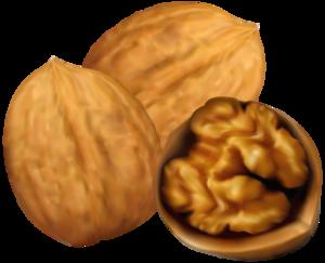 Walnuts PNG Transparent PNG Clip art