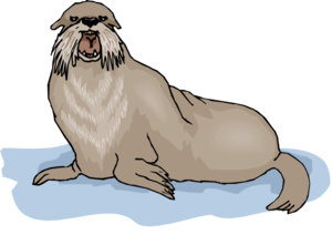 Walrus Background PNG PNG image