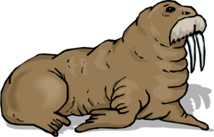 Walrus Download PNG Image PNG Clip art