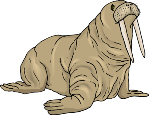 Walrus PNG Background Image PNG Clip art