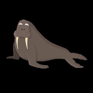 Walrus PNG HD PNG Clip art