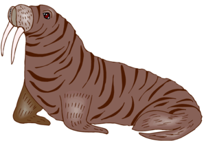 Walrus PNG Transparent HD Photo PNG image