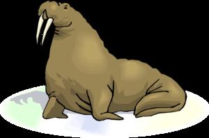 Walrus Transparent Images PNG PNG Clip art