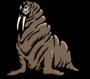 Walrus Transparent PNG PNG image